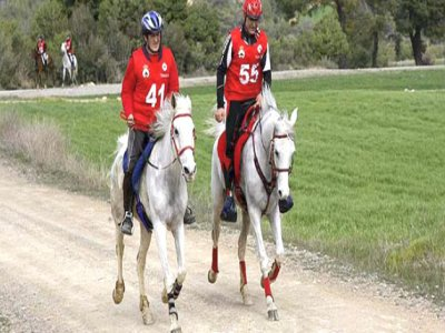 Horse Riding/English Camp for adults, Trapagar