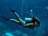 Discover the world of diving