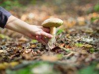 蘑菇+住宿的课程和收集