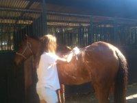 Aseando al equino