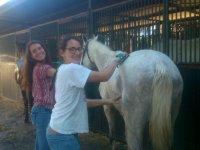 Chicas cepillando a uno de los caballos