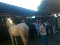 Chicos y chicas con caballos