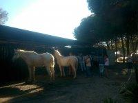 Cuidando de los caballos en la cuadra