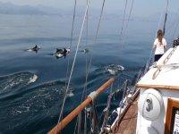 Alquilar un velero en Estepona