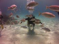 Buceando entre peces en Mallorca