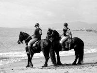 在海边与马匹