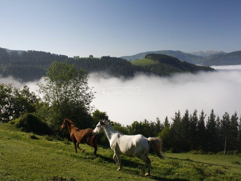 Ruta a caballo en Gorla