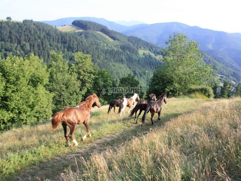 Horses in the wild nature