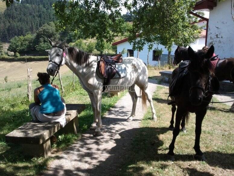 Ruta a caballo de media jornada