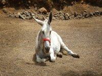 Ven a conocer a nuestro burro Pancho