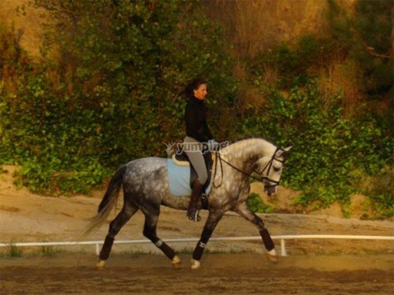 A cavallo sul dorso di un cavallo