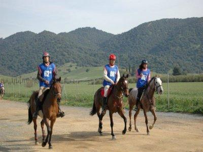 Horse ride + meal, Córdoba