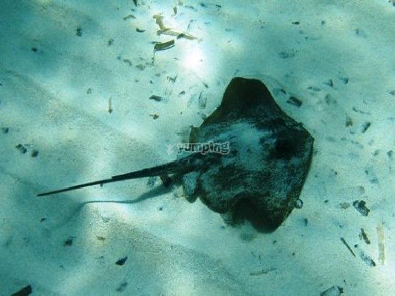 海洋动物群。