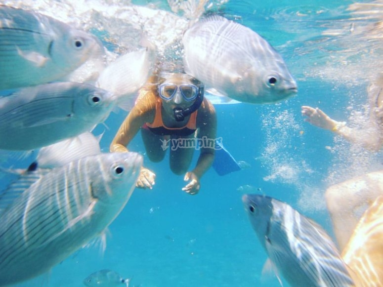 Buceando junto a los peces