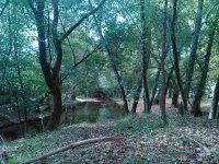bosque y pantano para la ruta