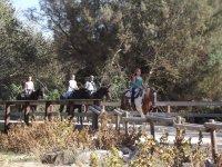 Cruzando el puente con los caballos