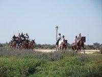 Excursion con caballos y carros