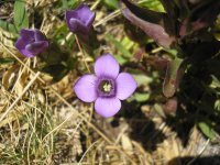 Preciosa flor morada