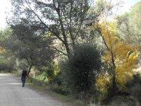 Paseo Botánico Montes de Málaga