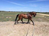 Trabajo con el caballo en la pista