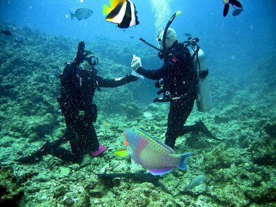 Divemaster diving course + 2 specialties