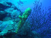 Fondos marinos haciendo submarinismo