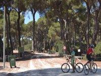 Pareja de ciclistas entre pinares