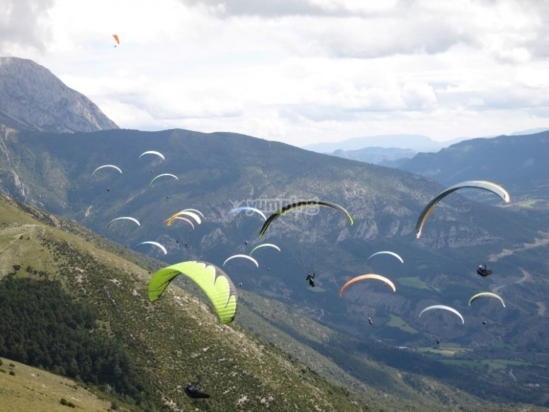 Group of paraglides