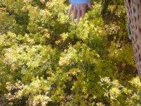Rozando la vegetacion con el globo