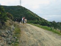 En el camino con los caballos