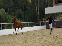 Jinete domando al caballo