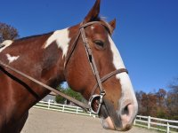 Monthly voucher of 4 horse riding lessons
