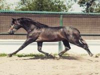 Doma de caballo