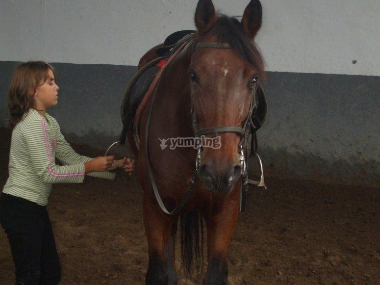 Setting the saddle