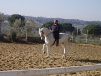 Horseback riding lessons 1h all levels