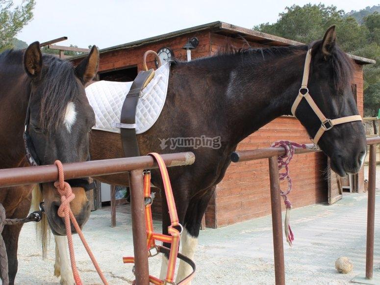 Ven y monta a caballo