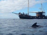 ballenas piloto bussard