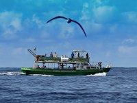 观看拉帕尔玛岛的鳍鲸