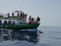 乘船游览拉帕尔玛岛