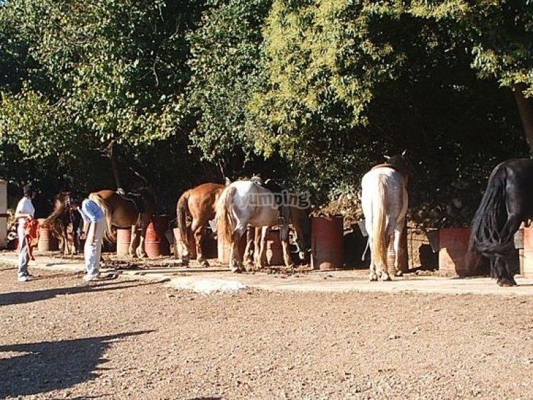 cavalli in Asturie