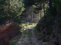 Ripollès的教育徒步旅行6小时
