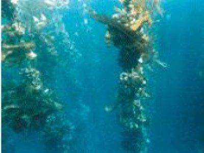 Naviera Mar de Ons