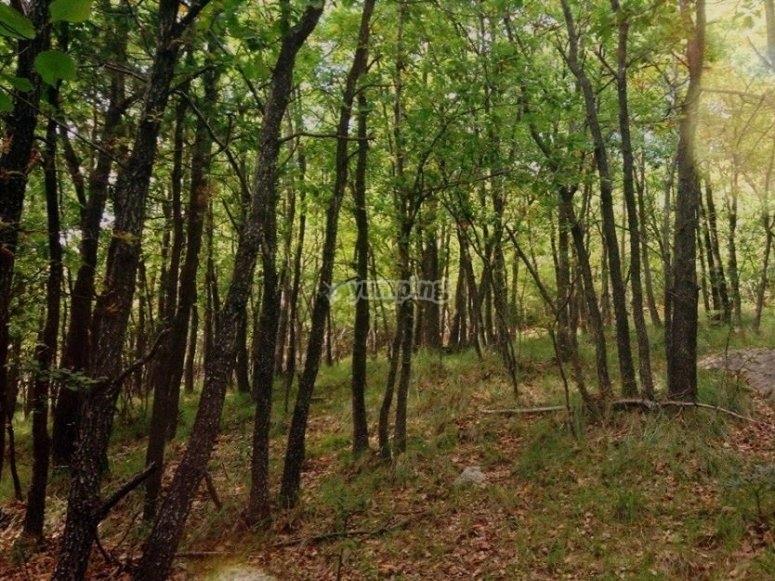 在森林的中间