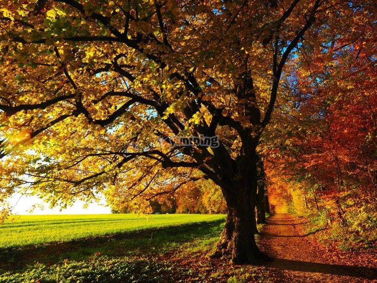 arbol en otoño en la pradera