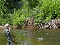 pescando en el rio ramas y hierba