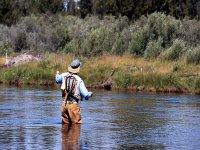 捕鱼河和植物