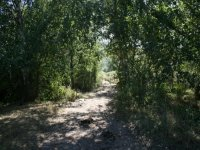 Cebollera之路