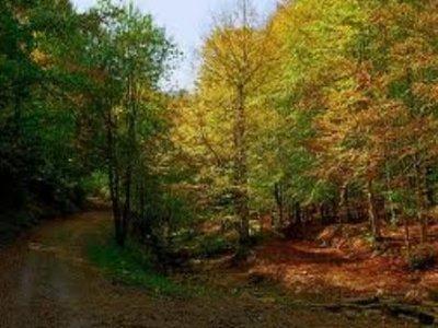 徒步旅行山毛榉森林的Rupit i Pruit 6h