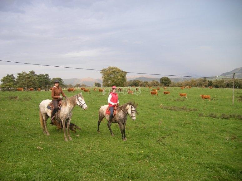 Pasea por verdes praderas a caballo