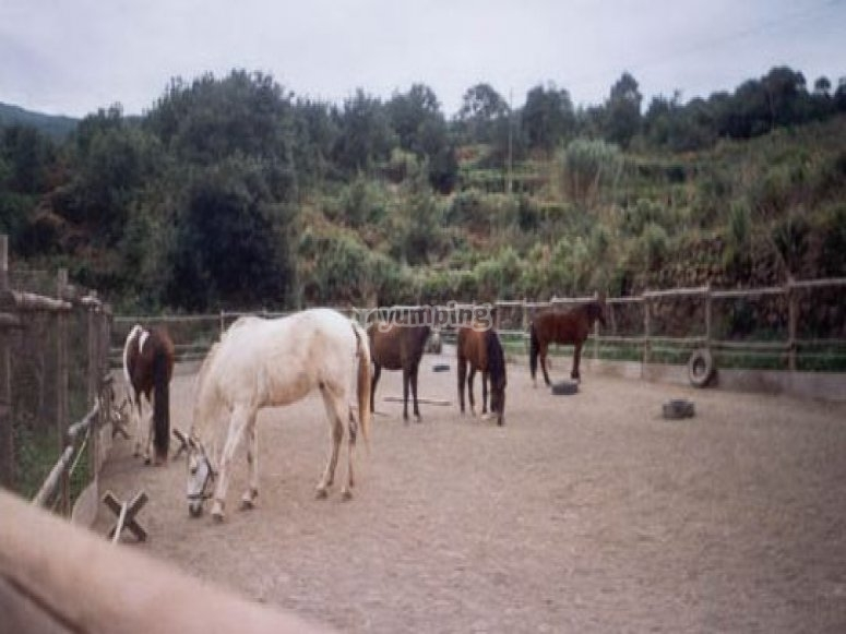 Riding school in Icod de los Vinos